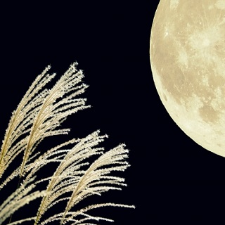 10月1日(木)は十五夜